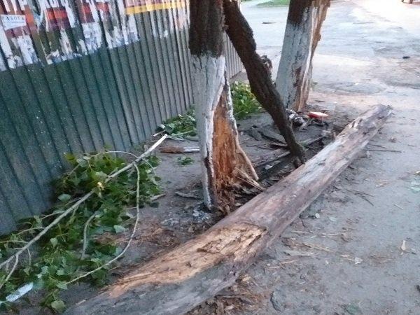 В Ростове девушка за рулем «Мазды» врезалась в дерево