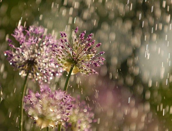 На выходных ростовчан ожидает дождливая погода