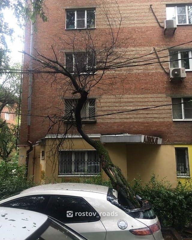В Ростове из-за непогоды стали падать деревья