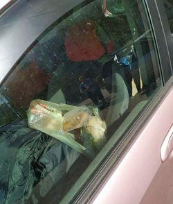 В Самарской области машину атаковали мухи