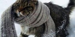 Зима, уходи: в выходные в Самаре жары не будет, будут заморозки