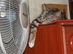 Жара, жара, гроза: в ближайшие три дня в Самаре будет настоящее лето
