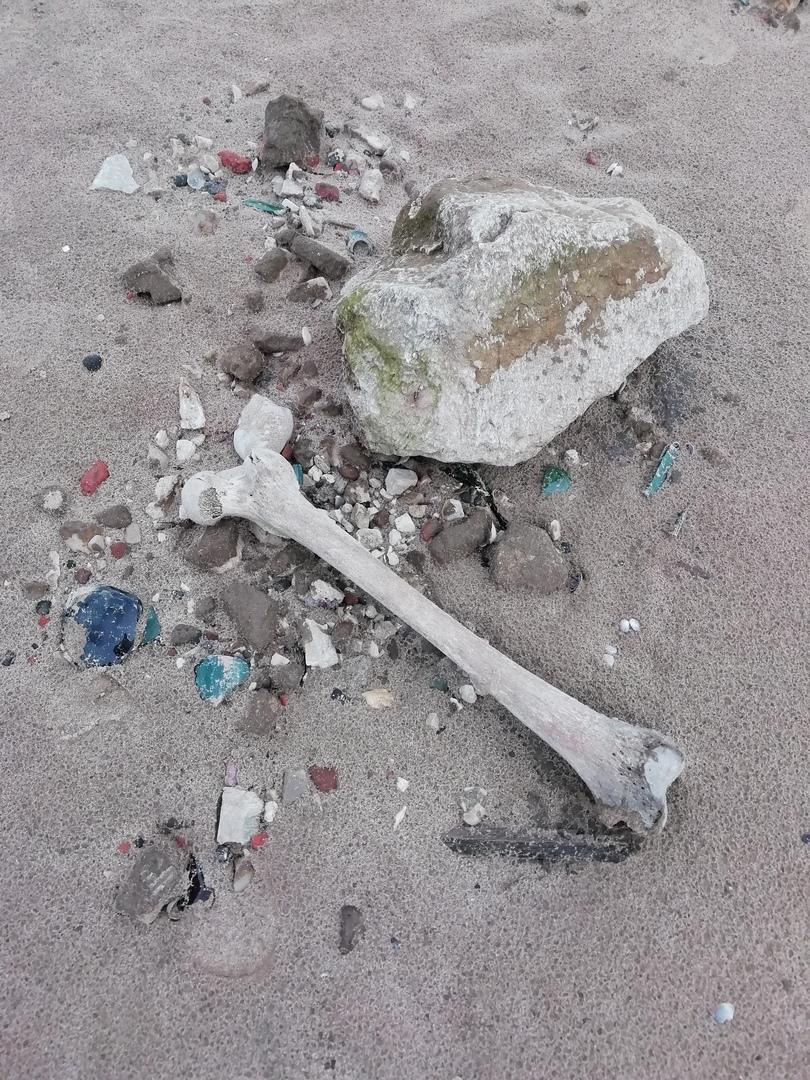 Около памятника Татищеву в Тольятти всплыло старое кладбище