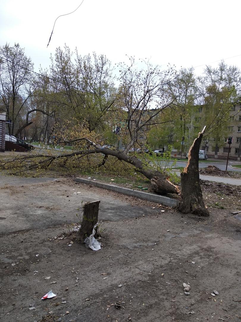 В Самаре начали падать деревья и остановки