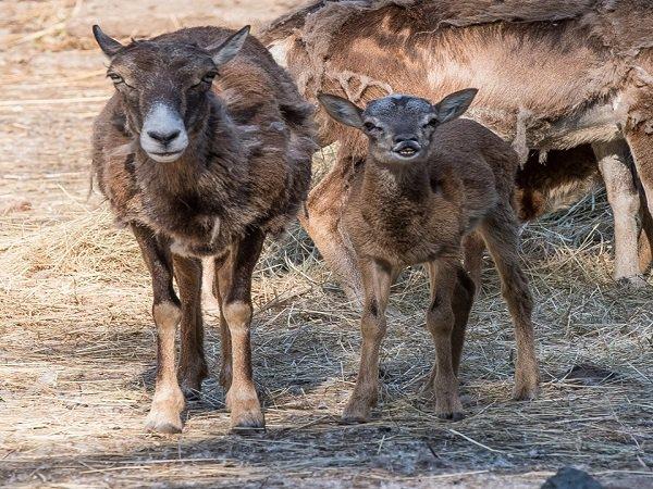 В ростовском зоопарке большое пополнение: на свет появилось сразу шесть животных