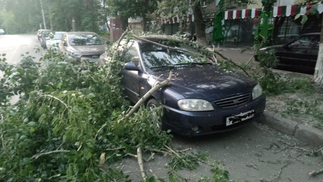 «Ласточке» нужна помощь «медиков»: в Самаре на иномарку рухнуло дерево